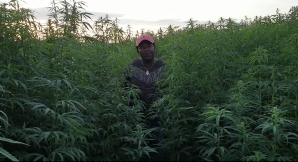 Rwanda approves cannabis farming for export ! Good move!!!