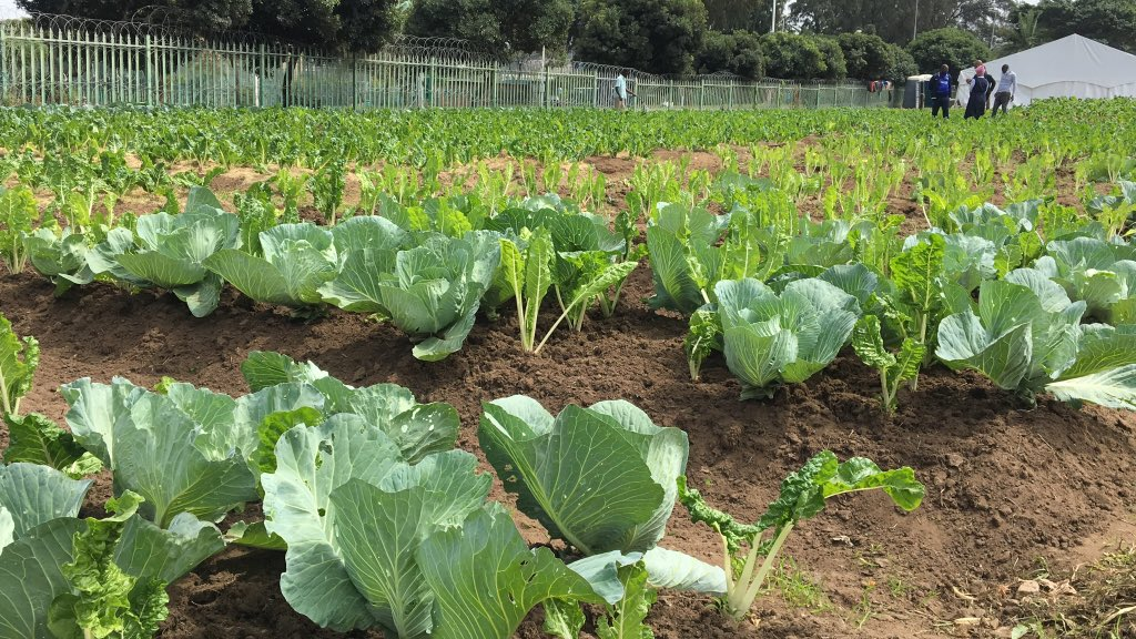 [PICTURES] Homeless men housed at a temporary shelter in EThekwini during Covid-19 have established an agricultural project in the inner-city. With assistance from the municipality and NGOs, they are now selling organic vegetables to locals. @NkoRaphael https://t.co/f1W44ELiJF