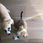 Image for the Tweet beginning: Puppies and Rainbows :)