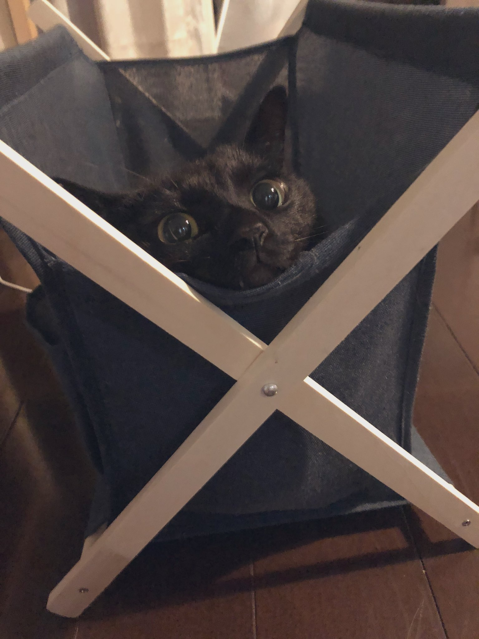 猫収納用ラック01