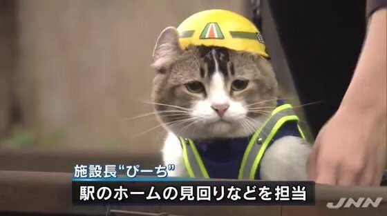 黄色いヘルメットかぶった猫、なんとなく現場にいてほしくないな…
