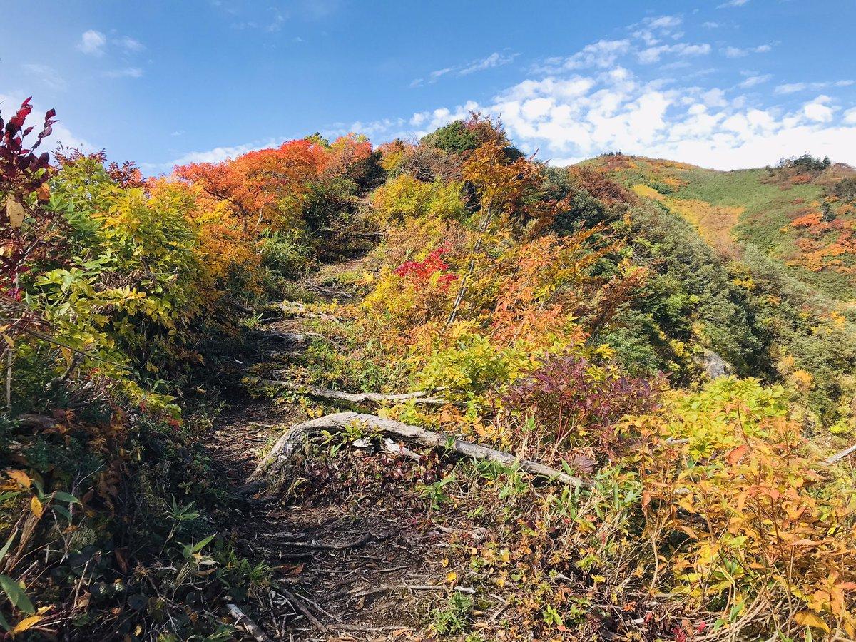 #登山道 #富山県  山登りして 気が付いたのは 誰かが 登山道を整備してくれている。。  おかげで とても歩きやすい。。 有り難いです。  せめて ゴミは 持ち帰ろう。  ひとり登山は 意外と いろんな方が話しかけてくれて 山の話が聞けて 楽しいです。。 https://t.co/dUhFc51M26