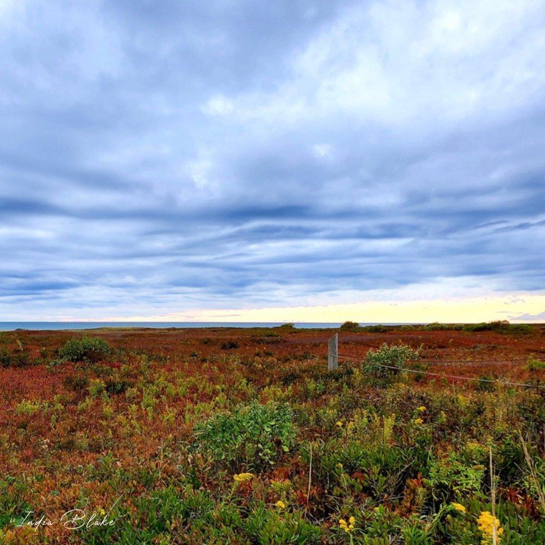 """Adopt the pace of nature. Her secret is patience."" -Ralph Waldo Emerson  📸 @CanonUSA EOS-1D Mark III 📍 #Minnesota  #indiablakejohnson #fallvibes #fallscenery #fallphotography #canonphotography #canonshot #autumn2020 #naturegeography #natureview #beautyinnature https://t.co/SrSUDfaNwO"