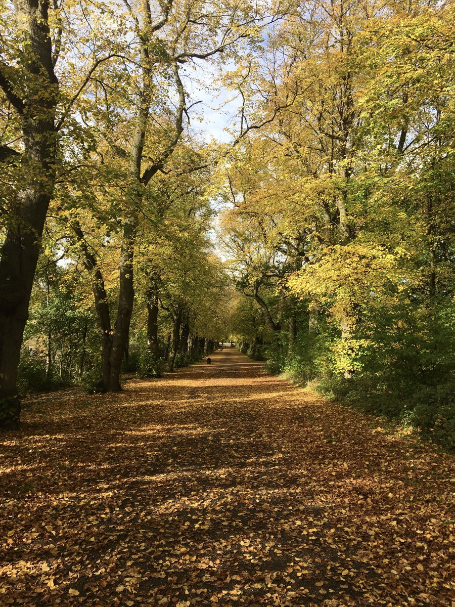 Out in Sheffield's beautiful parks today following the news that the city was again awarded 13 Green Flag awards 🍂 what's your favourite park in Sheffield and why?