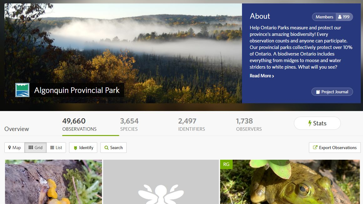 Hello Naturalists!  The Algonquin Provincial Park iNaturalist project is nearing an impressive milestone: 50,000 observations!   Just a few hundred more to go...!  Every observation is important!  For more information visit https://t.co/3poT3tIz7k or https://t.co/LXuC7dR4xO https://t.co/JccZOpXsSi