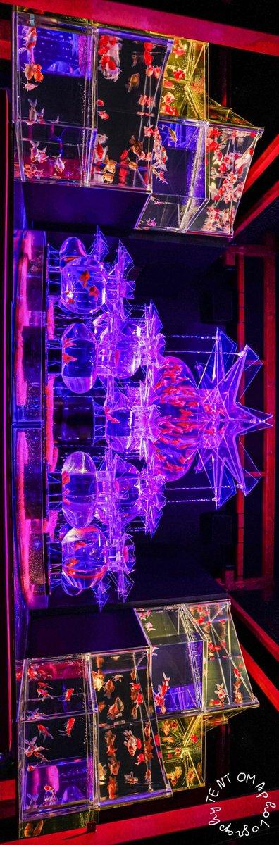 彩り世界𓆝  #二条城 #アートアクアリウム  #金魚 #カメラ初心者 #ポートレート #ポートレート撮影 #ファインダー越しの私の世界 #レンズ越しの世界 #キリトリセカイ #α7III #photo #PhotographyIsArt https://t.co/SMiTBtDGvg