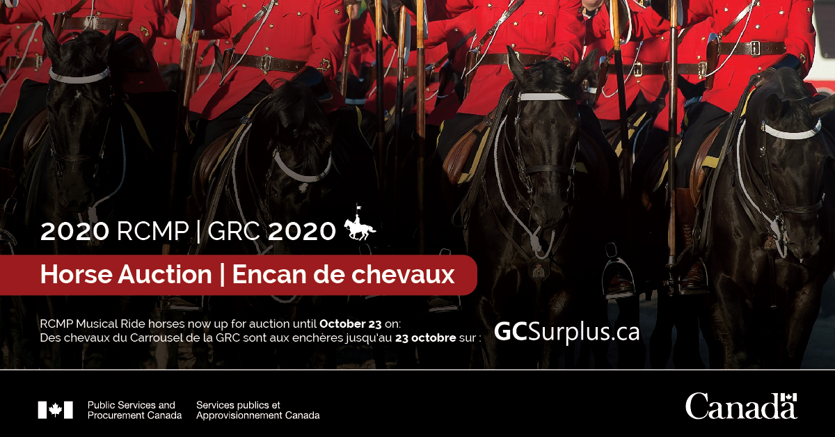 For 80 years, the @rcmpgrcpolice has bred some of the finest #horses in Canada. Visit #GCSurplus now until October 23 to bid on a selection of these beautiful horses: ow.ly/H2Zc50BTseI