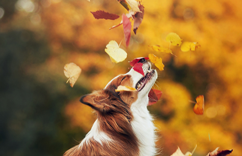 Who else is enjoying the leaves changing colour.......  I love it when the trees change to red and orange...  Looking forward to a dry day to enjoy the woods....  #itscupboardlove #autumnwalks #leaves #collie #walkies #dogslife https://t.co/Txdd2NiAE6