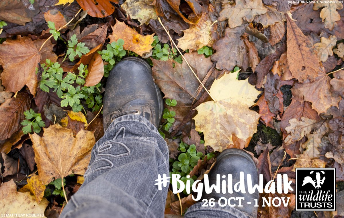 Are you taking part in our #BigWildWalk next week? We want to know the challenge you've set yourself! Share your fundraising links below 👇👇 https://t.co/BMnY3j0TUT https://t.co/dRliFkW2ZY