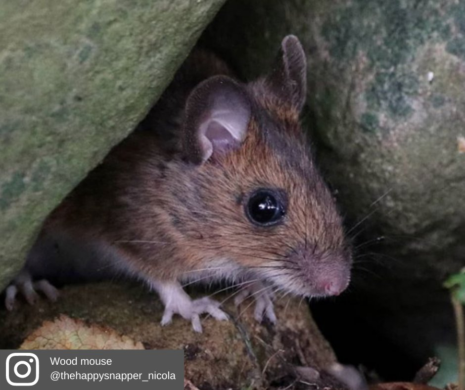 Here's our #picsoftheweek to brighten up your Friday😍 Don't forget to tag us or you can post directly on our exclusive members' Facebook group 👉 https://t.co/oCbMTrlmg2 Love NI's wildlife🐝🐿️🐭? Join us today & play your part in nature's recovery 👉 https://t.co/6qQiSQnitC https://t.co/2PQmmF8mxX