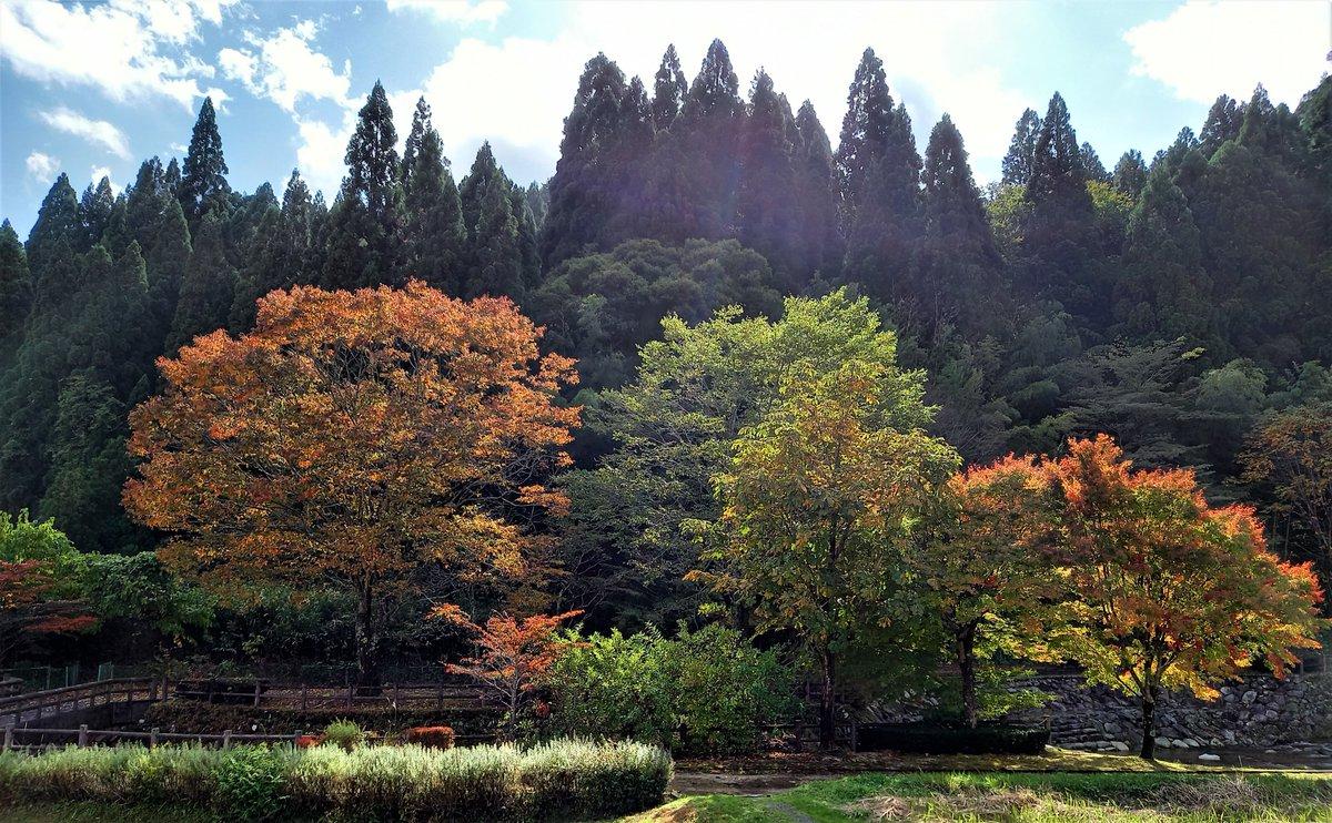 紅葉が深まってきましたのがお分かり頂けますでしょうか?(´ω`*)✨  まだこれからなんですけど近くでしたら、恩原高原、岡山県立森林公園等は素晴らしい紅葉をご覧頂けますよ(´ω`*)✨  是非『わび・さび』を感じにいらしてください(; ・`д・´)✨ #紅葉 #森林公園 #わびさび https://t.co/Jh6xC3OtfR