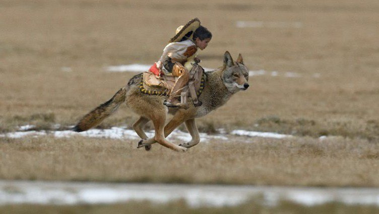 Coyotes, TeamKJ, Kevin Jackson