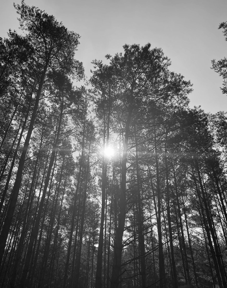 a forest 🌲 🌳 🙂  #blackandwhitephotography #photography #NaturePhotograph https://t.co/GNsOs9OaIu