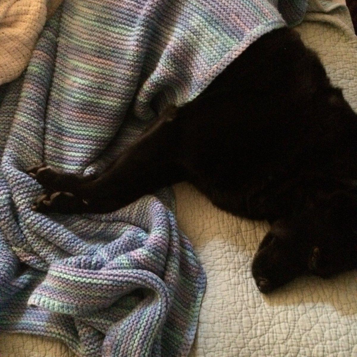 @jamiepatrice60 @serenawilliams Why my dog gets a blanket.