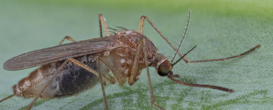 Het monitoren van muggenactiviteit is zeer belangrijk. Omdat muggen veel overlast kunnen veroorzaken, maar óók omdat er virussen zijn die door muggen overgedragen kunnen worden. Blijf daarom muggenoverlast doorgeven via https://t.co/ok9mKDK66n https://t.co/hgORd40os2
