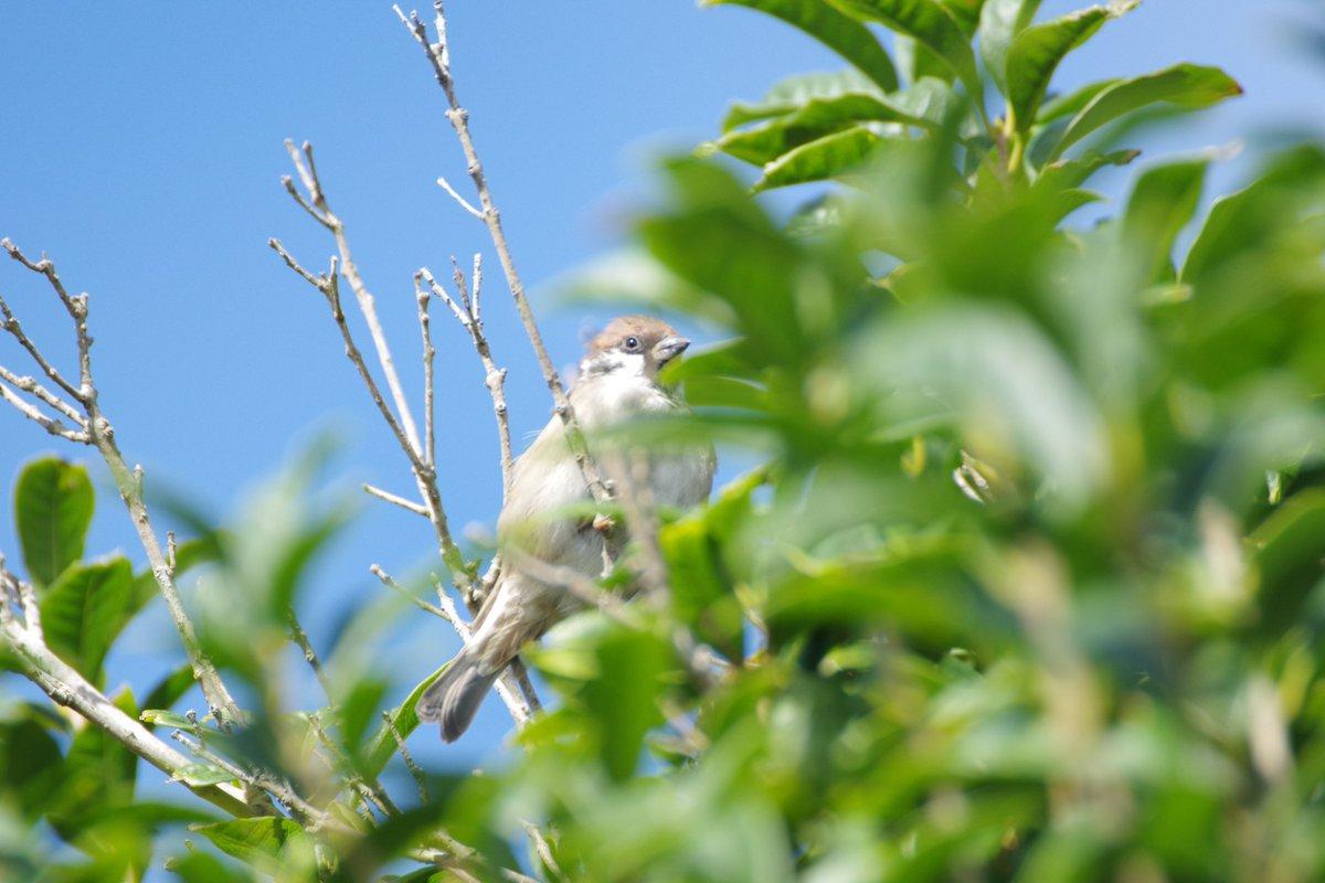 お昼のご近所さん。 ・・・私がカメラをもってうろつくポイントから鳥が消えるような・・・😭 #PENTAX #PENTAX_K_70 https://t.co/mg4KHYaIM0