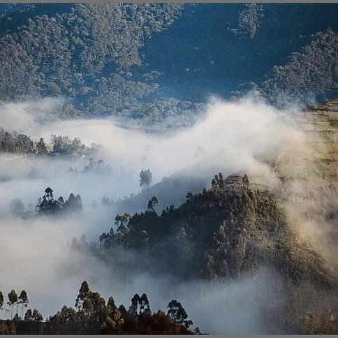 🇺🇬BWINDI IMPENETRABLE NATIONAL PARK: 🦍👣🦅🐦 Be part of our Amazing Safari https://t.co/KfzuJYEAAw 📩info@gorillasights.com #MountainGorillas #SafariUganda #Bwindi #TheHomeofGorillas #VisitUganda #TravelForGorillas #NatGeoWild  #BbcTravelNews #TravelMade #LonelPlanet https://t.co/Ns9d1xokmG