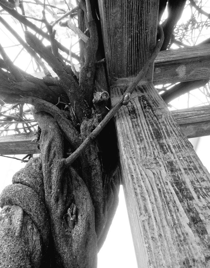電力 藤の木 関西
