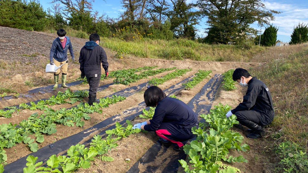 ビーツの土寄せをしました 朝早くからの作業でした 葉が大きくなってきて嬉しいです(*´ー`*)  #NAFU #ビーツ #農業 https://t.co/gaSUN5L2Lu