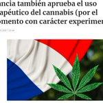 Image for the Tweet beginning: El ensayo público con #cannabis