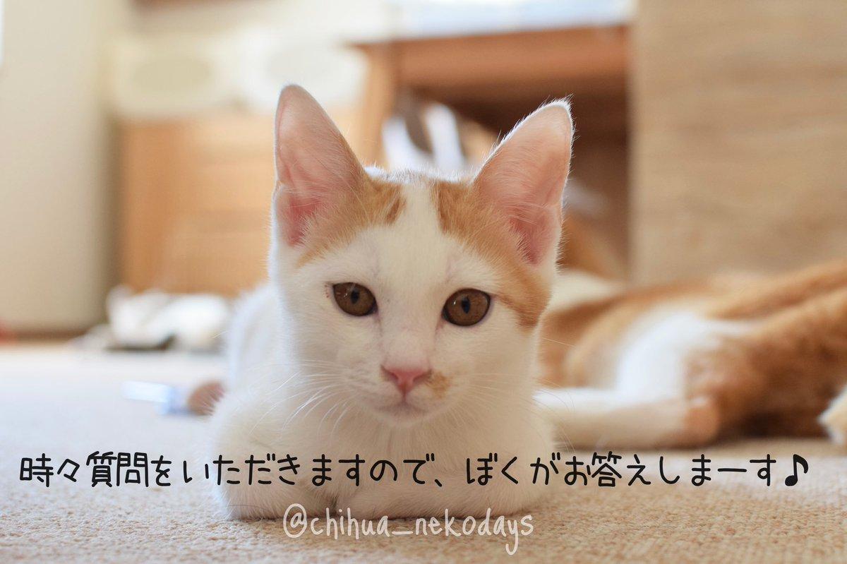 を 飼う 費用 猫