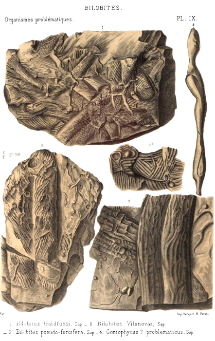 """A little ancient science of ancient life for #FossilFriday. Gorgeous illustrations of old traces like Cruziana and Gyrolithes from De Saporta's 1881 book """"Les organismes problematiques des anciennces mers."""" (avail for free via @googlebooks!)     https://t.co/zKiwY8vhIU https://t.co/2X6GAOZ6yy"""