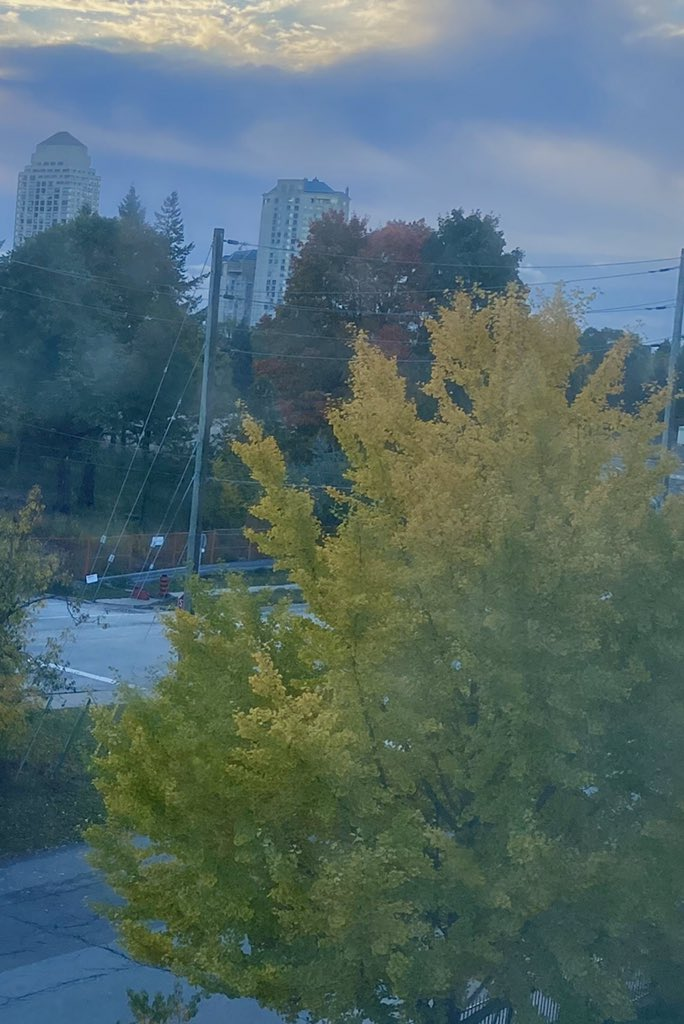Fall colours from my window this morning..🍁🍁🍁🍁 #CatsOfTwitter https://t.co/Mffd2SH7pi