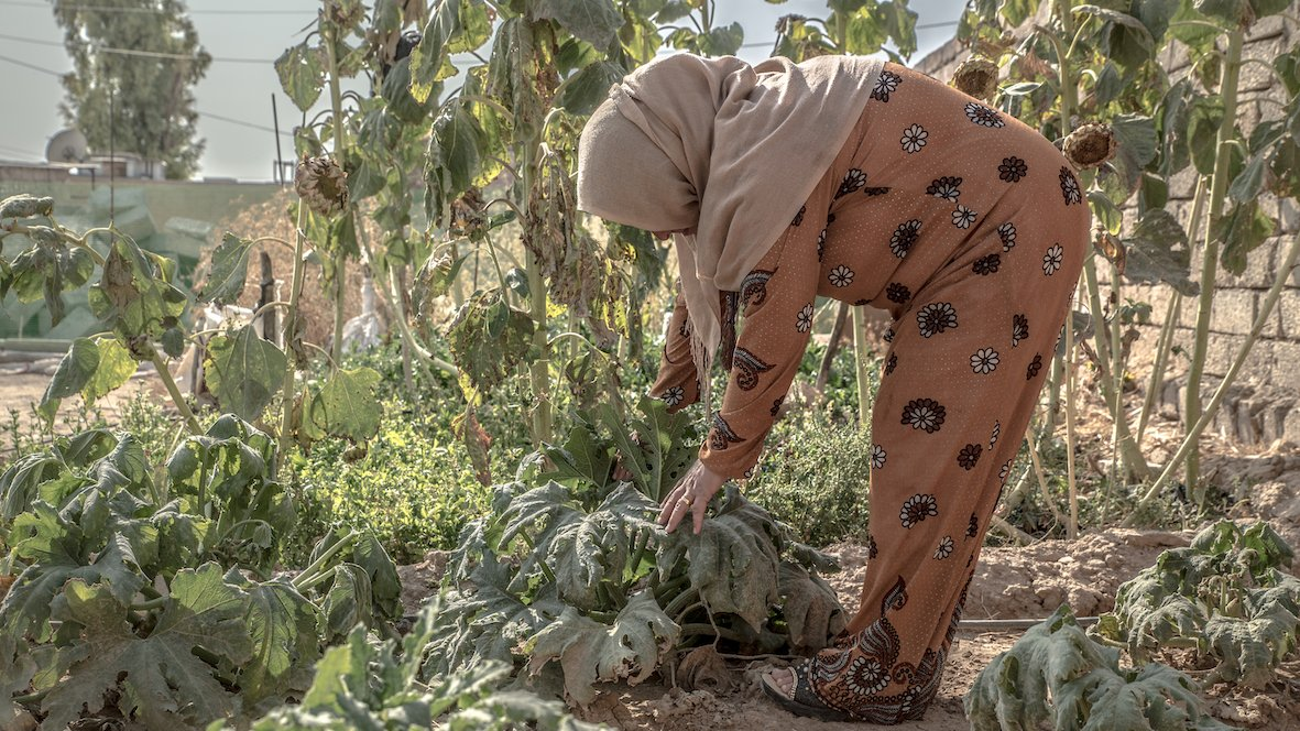 Joint Press Release: On World Food Day, FAO, IFAD, WFP and the World Bank renew their commitment on pioneering research to support food security in Iraq. #WorldFoodDay 🙏🏽🌿 @FAOinNENA_EN @IFAD @WorldBankMENA ℹ️ wfp.org/news/world-foo…