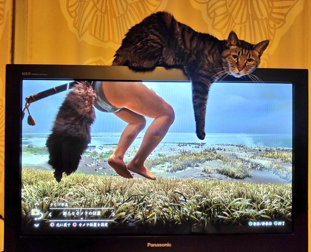 ついに褌を手に入れた仁くんと猫が奇跡のコラボしてる