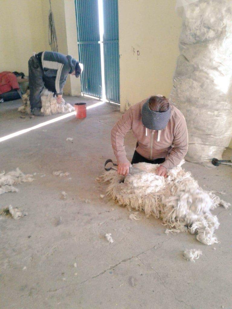 Irene Beroiza cumplirá 69 años en diciembre. Aún esquila a sus chivas, recibe chivitos, anda a caballo, sabe alambrar, carnear y cocina asado.En su tiempo libre, hace tortas fritas criollas y panes en horno d barro. Es d #PasoDeIndios #meseta #Chubut #DíaDeLaMujerRural https://t.co/UWrJ6dyJMQ