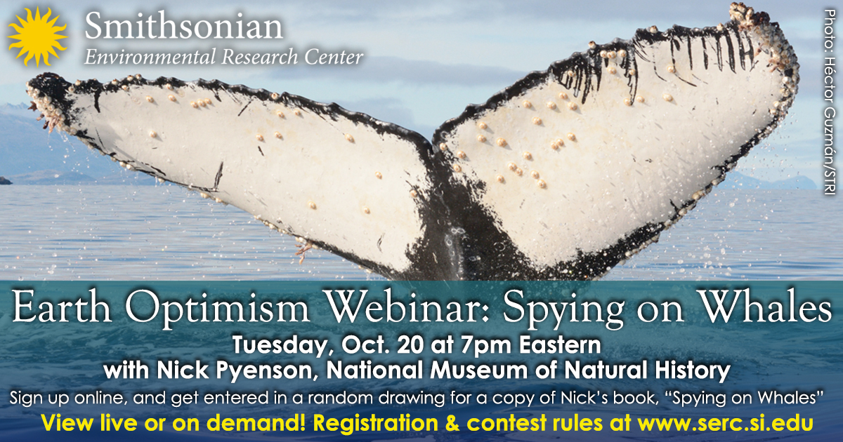 Don't miss this tomorrow night at 7pm EDT! #CharismaticMegafauna #Whales #EarthOptimism