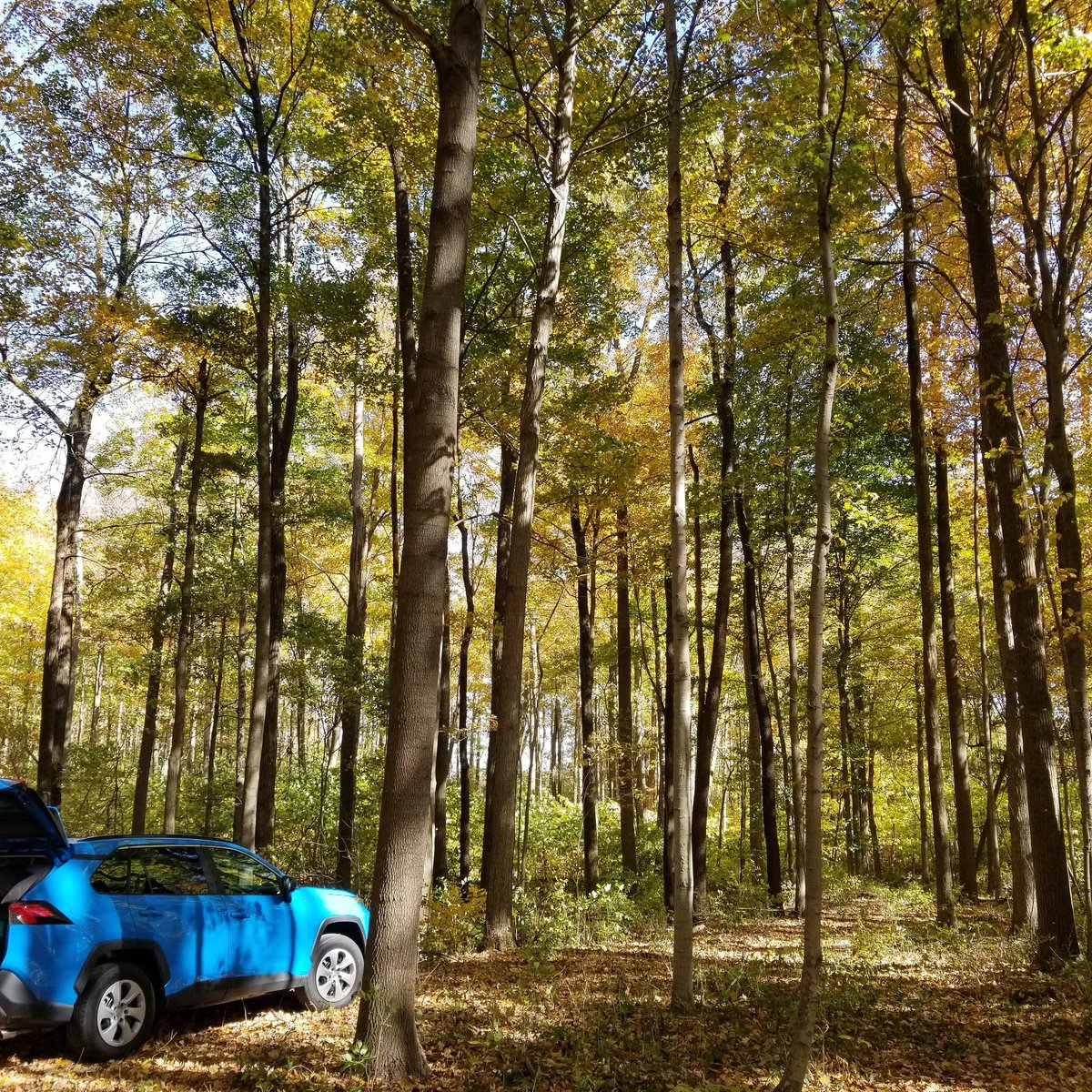 Home for the weekend. Peak leaf. Cold beer.  Great company. Perfection. This is the latest in the season we've camped. It's worth the temp to see the scenery. #Fall #SpoopySeason #campinglife #October #Tentcamping #Tent #Leaves #Toyota #Rav4 #Campfire #Smores https://t.co/LSD4LQ0qGJ