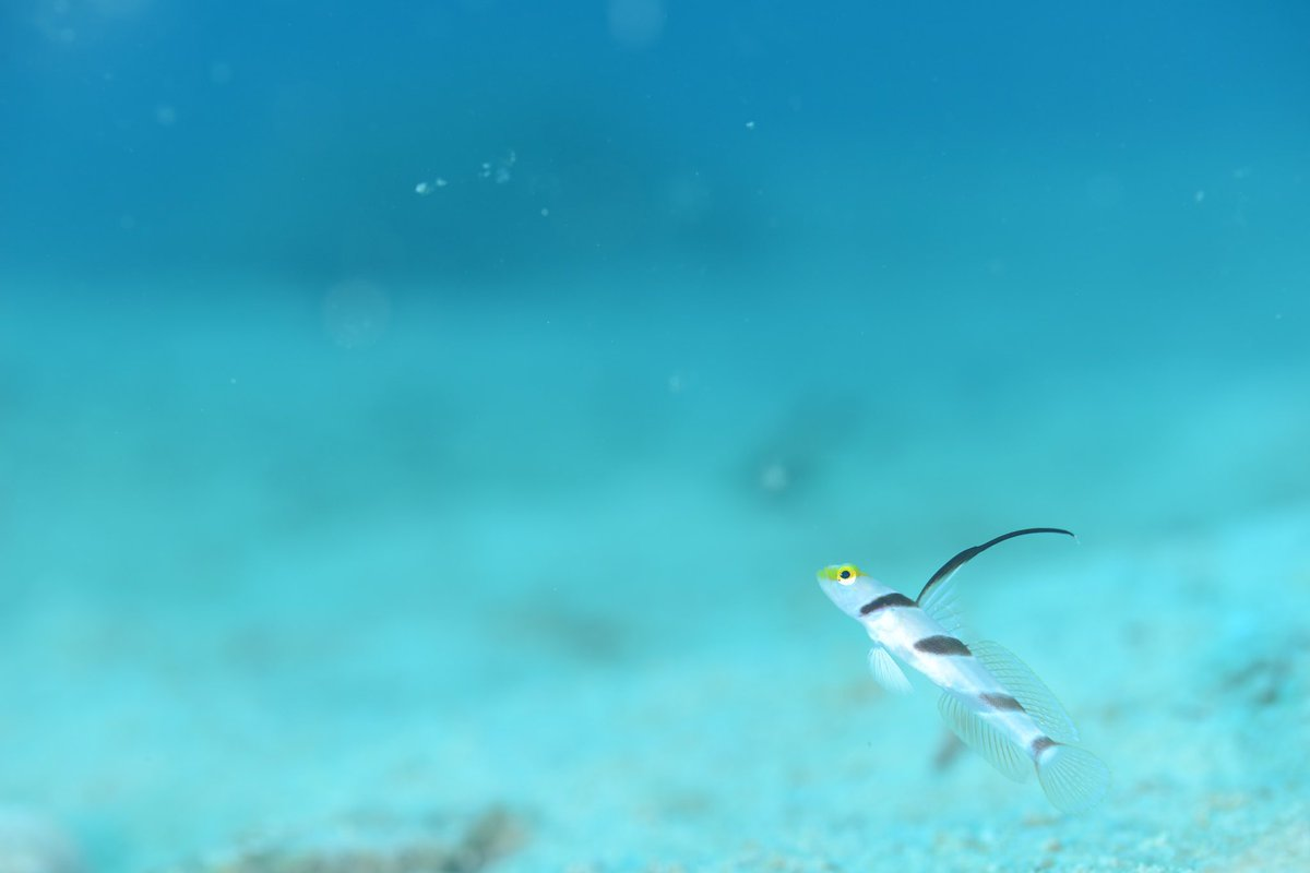 #恩納村 #diving #dive #Ocean #island #Fish #nature #fantastical #無人島 #沖縄本島 #ダイビング #ダイビング好きな人と繋がりたい #沖縄 #海 #水中写真  #🌞#ファインダー越しの私の世界 #olympus #Nikon #真栄田岬 #青の洞窟 #クマノミパラダイス #D800 #水中フォト #旅行 #旅 #癒し https://t.co/KbCD5nj4gI
