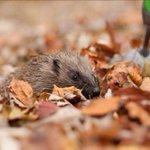 Image for the Tweet beginning: Fallen leaves in your garden?