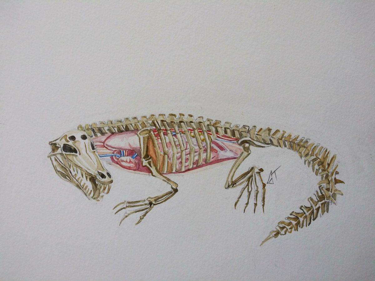 Crocodile Watercolor