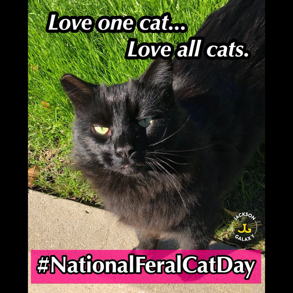 It's #NationalFeralCatDay on this #FeralFriday! @toby_rules1 @MaineCoonCatsOH @LittleMaineCoon  @JusticeToAll @JoyOfCats @TheCatMalice @berylcoon @GeneralCattis @LordGraydon @ridley_aka @Ophur_Cat https://t.co/dxo11DOj6Y