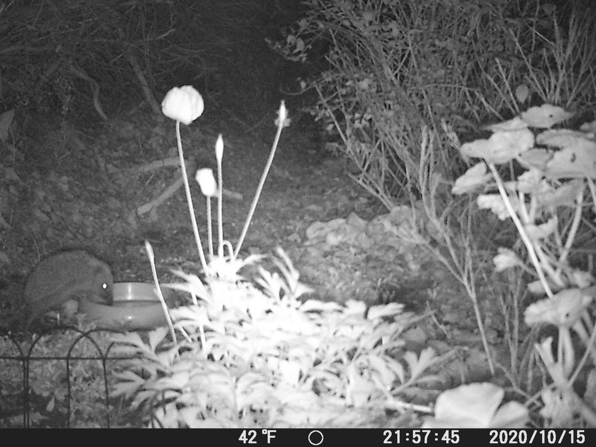 Looking to see what this little fella has been up to in the night always brightens my day #hedgehog #30dayswild https://t.co/Kg12mWI2ws