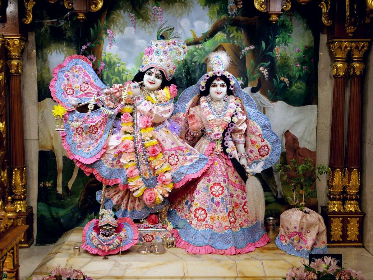 Today's Deity darshan inGovardhanPearlsoutfit #krishna #radharani #radhakrishna #girigovardhan #gauranitai #jagannath #baladev #subhadra #srilaprabhupada #deities https://t.co/LVa0dcu7cO