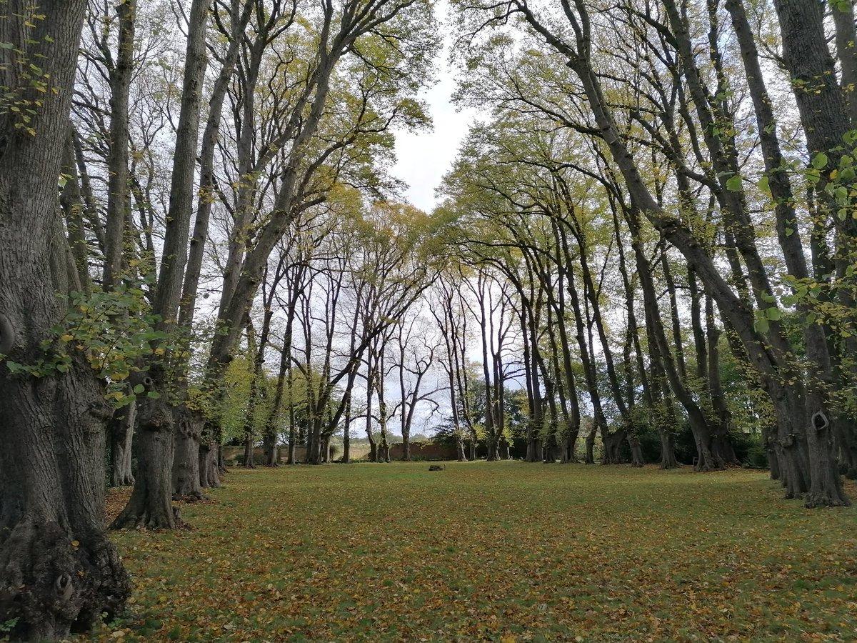 Autumn's beauty at Gisborough Priory 💚 #autumnleafwatch #treechiefs #30dayswild #autumnwatch #mickandria #clevelandstreetwalk https://t.co/0XpUPns8lv