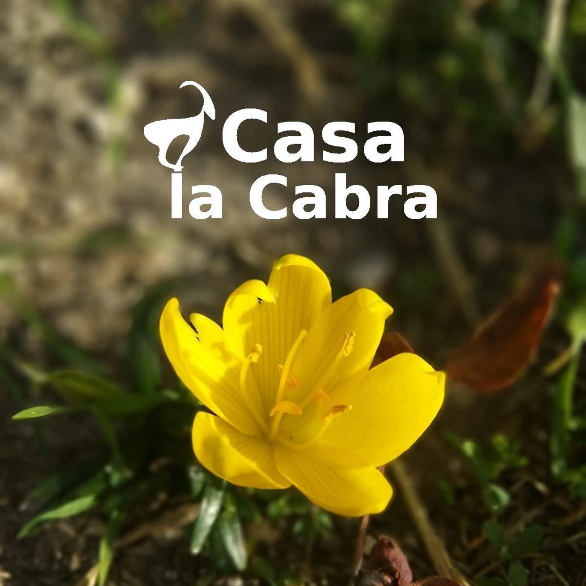 Las flores amarillas de Sternbergia https://t.co/To61bsXEHA  #CasaLaCabra #Moclín #GranadaParadise #Granada #DreamingGranada #loves_granada #breathtaking #epicview #sun #spain #traveltospain #travelblogger #travelphotography #granadaturismo #gollizno #rutadelgollizno #moclin https://t.co/whahVLzpYK