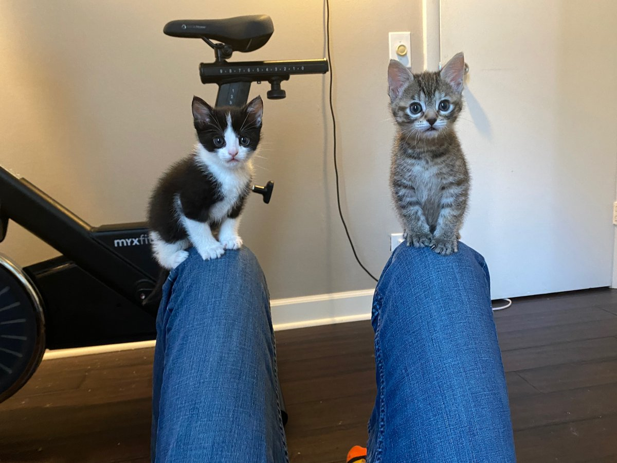 Remember when we said you'd meet Patsy's kittens soon? Well here they are! Luke and Shania are a bonded pair still comfortably living with their mama in a foster home. But soon they'll be looking for their forever home!  https://t.co/lMRhaM7nS5 https://t.co/XKzaR4Etpi