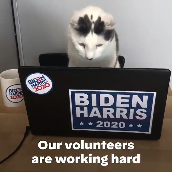 We've got to come together to defeat Donald Trump –– Democrats, Independents, Republicans, and yes, even Demo-cats.