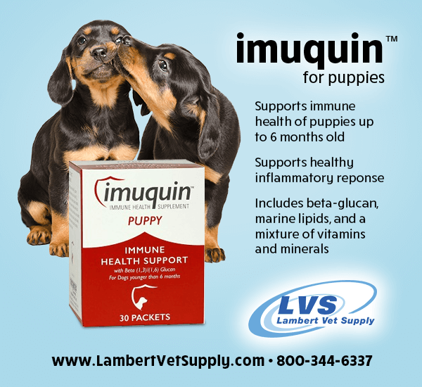 Support a puppy's immune system with Imuquin For Puppies! Formulated with beta-glucan, marine lipids, vitamins & minerals, Imuquin aids immune defenses, organ & tissue function & more. Get the facts ---> https://t.co/H5xAGQpTRL https://t.co/TYD7GGroFH