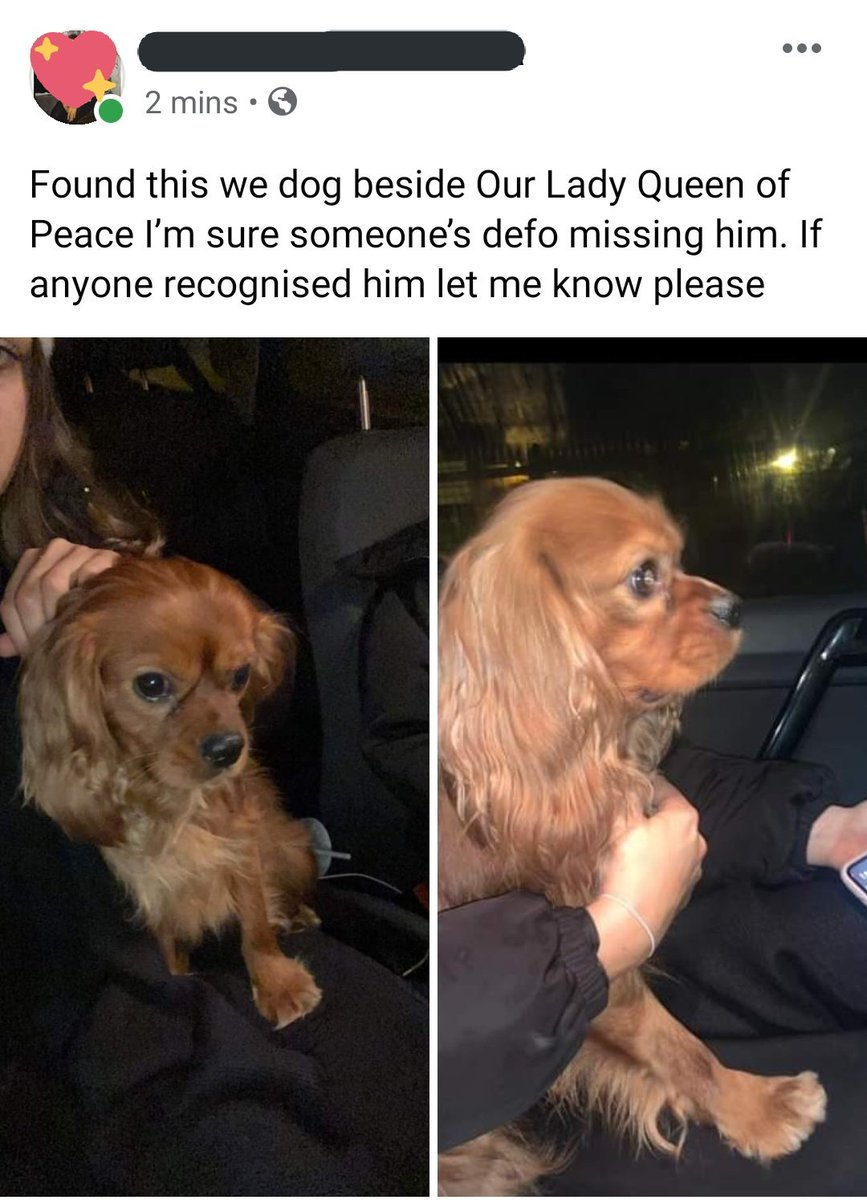 A friend has found this gorgeous wee pup by Our Lady Queen of Peace. Please share!