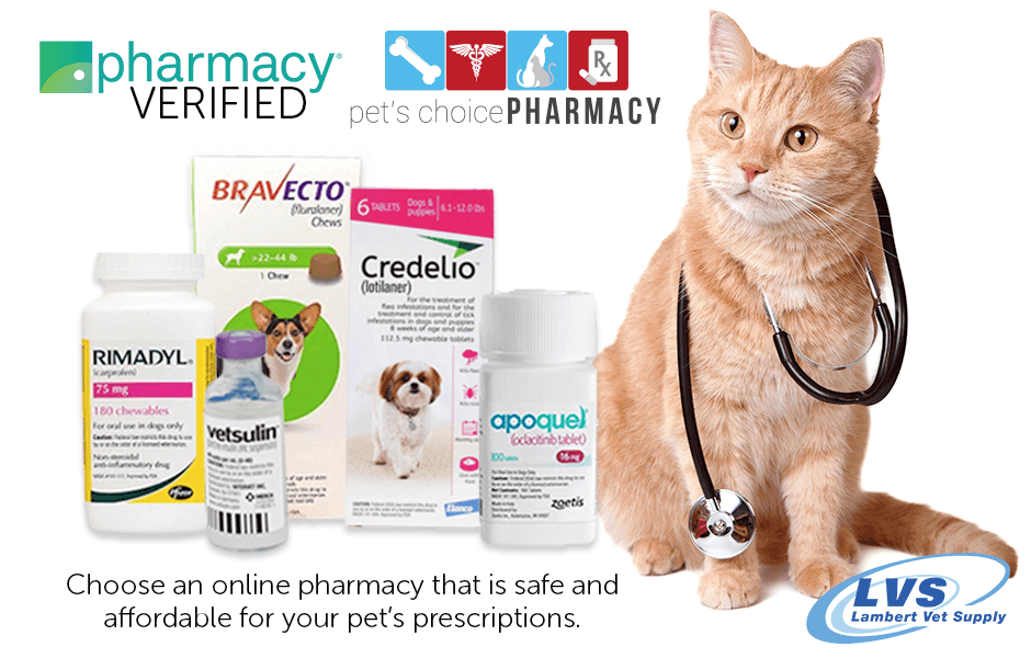 Who knows pet pharmacy? We do! Depend on us for affordable pet prescriptions at competitive prices! We make it easy & convenient. Supporting your pet's health is our #1 job! Learn more --> https://t.co/cSC0Bhof1w https://t.co/Cog68OztK0