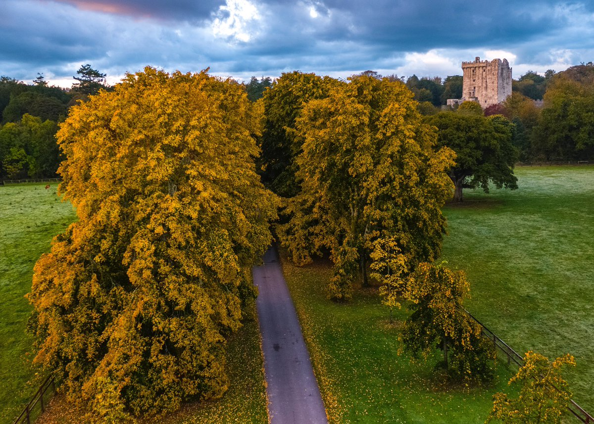 Our wonderful Lime Avenue is always a show stopper in Autumn 🍂   #blarneycastleandgardens #purecorkwelcomes #purecork #makeabreakforit #cork #ireland #blarney #castles #walks #weekend #like #follow #pictureoftheday #picoftheday #photography #autumn https://t.co/0jfC78PmLk