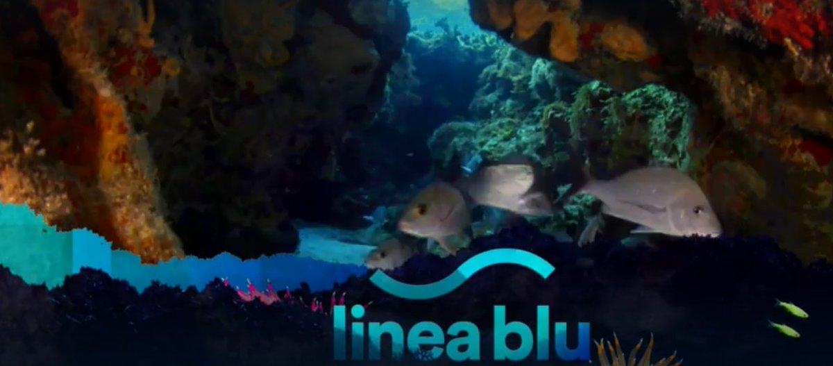 """rai 1 – """" Linea Blu """" * PUNTATA DEL 17 OTTOBRE 2020, « Porto San Giorgio – Il nostro mare e non solo » ( RIVEDI / REPLAY / REPLICA ) https://t.co/vHRuVJcMSb https://t.co/zkUz0BEUfR"""
