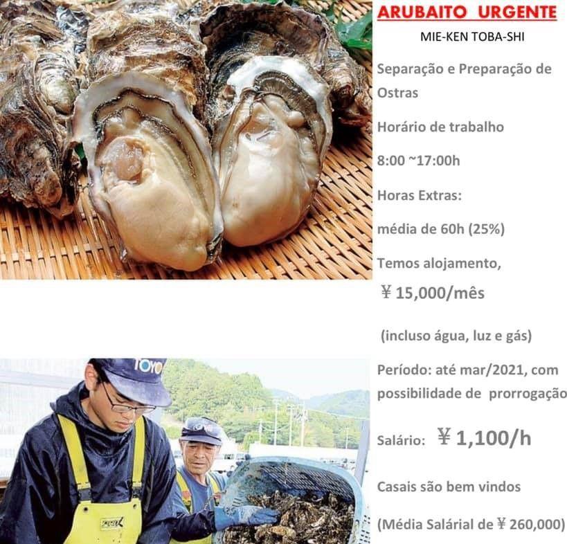 技能実習生が入ってこれないためか、牡蠣養殖場が日系ブラジル人向けに求人広告。大奮発して時給1100円、月給26万円。今年の冬はカキの値段も高くなるかも(苦笑)