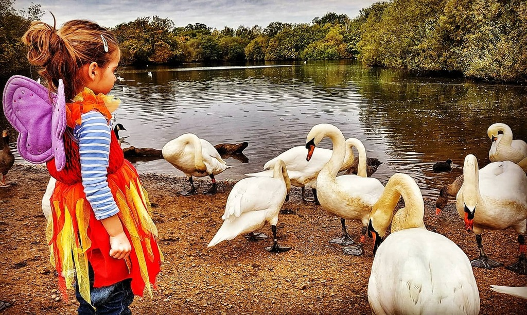 test Twitter Media - Feeding the swans in the appropriate attire, with proper swan food. .  #toddlerlife #swans #swanlake #sundaystroll #wildlife #nature #notbread #pellets https://t.co/l1Rs9UPSWg https://t.co/T92E7LpSfC