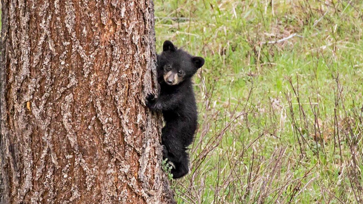 @nywolforg's photo on Bears